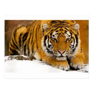 Tigre en la nieve lista para atacar postal