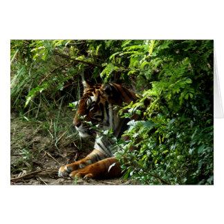 Tigre en la tarjeta de Bush