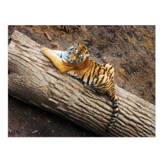 Tigre en una postal de la foto del registro