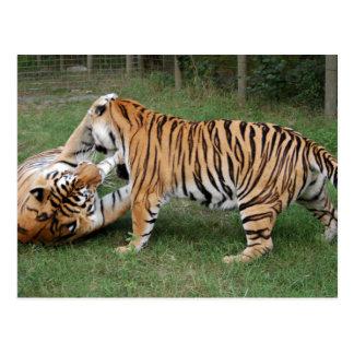 Tigre Friends-005 Postal