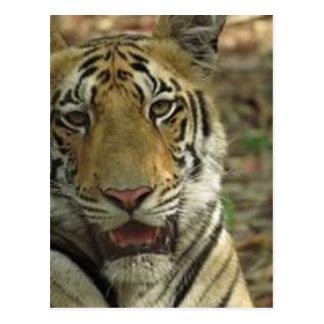 Tigre hermoso y sonriente postal