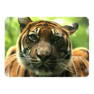 Tigre Invitación 12,7 X 17,8 Cm