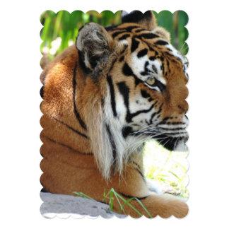 Tigre joven invitación 12,7 x 17,8 cm