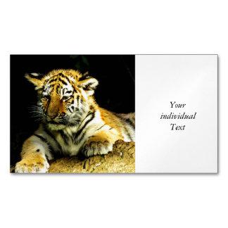 tigre joven lindo tarjetas de visita magnéticas (paquete de 25)