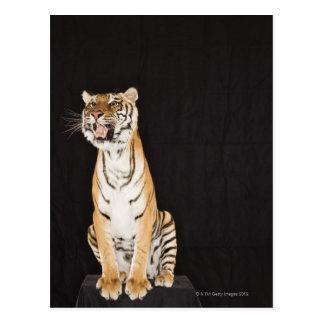 Tigre que ruge postal