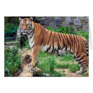 Tigre rayado tarjeta de felicitación