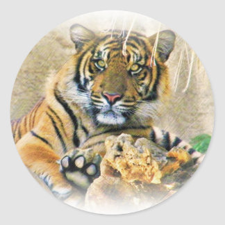 Tigre, Seeking_ Pegatina Redonda