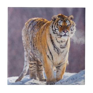 Tigre siberiano en la nieve, China Azulejo Cuadrado Pequeño