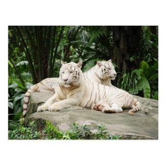 Tigre siberiano postal