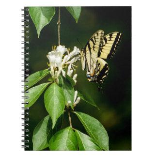Tigre Swallowtail en la libreta de la madreselva