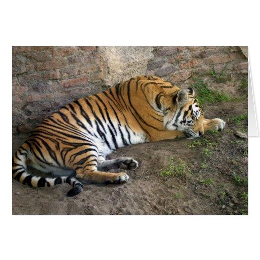Tigre Tarjeta