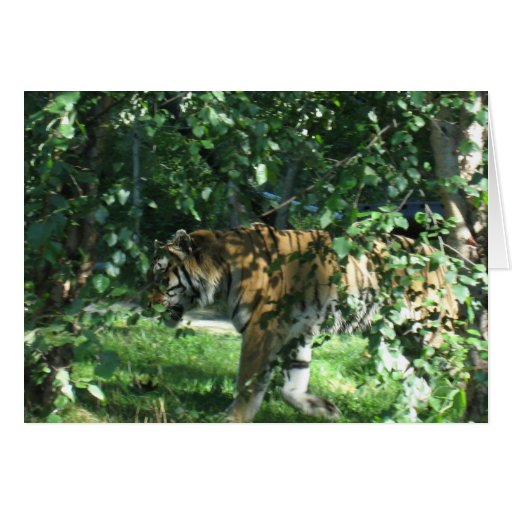 Tigre Tarjetón