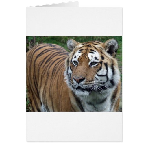 Tigre Tarjetas