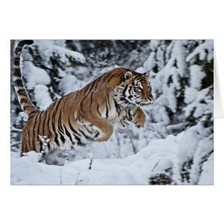 Tigre Felicitaciones