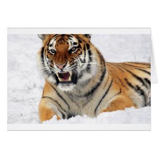 Tigre Tarjeton