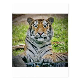 tigre postal