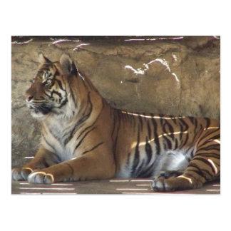 Tigre Tarjetas Postales