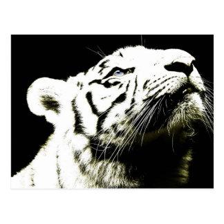 Tigre y esperanza tarjetas postales