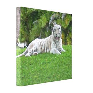 Tigre y palmeras blancos sonrientes lienzo