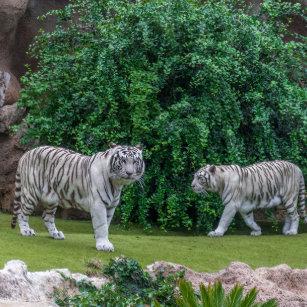 Accesorios Estampado De Animales Del Tigre Zazzlees