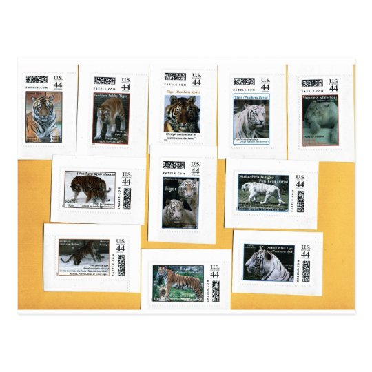 Tigres de los 4 colores postal