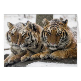 Tigres del invierno tarjeta pequeña