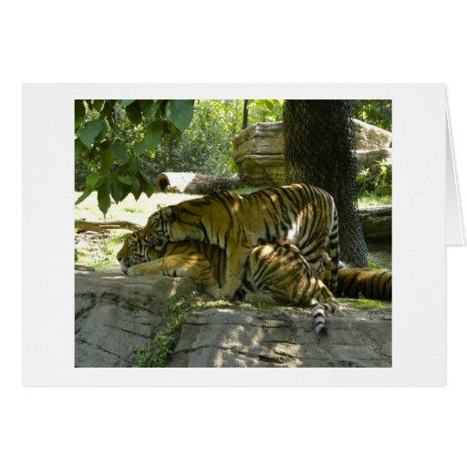 Tigres junto tarjeta