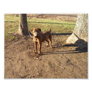 Tipo Brindle exterior derecho del beagle del perro Fotografia