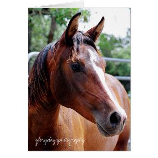 tiro árabe de la cabeza de caballo, tarjeta de felicitación