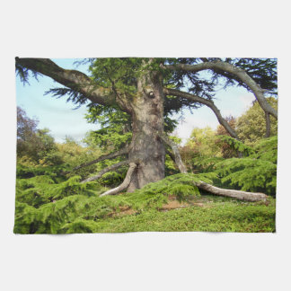 Toalla de té del árbol de Cedro-de-Líbano