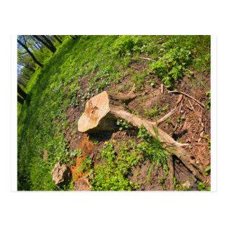 Tocón del árbol del corte al borde del bosque postal