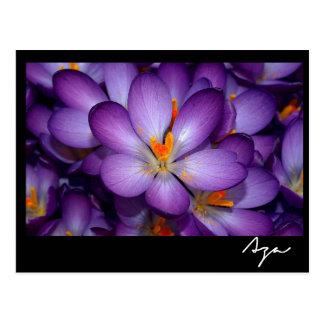 Todavía de la foto vida floral postal