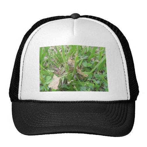 Tolva de la hierba de Brown que oculta en hierba v Gorra