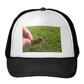 Tolva hermosa de la hierba a disposición gorras