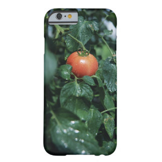 Tomate Funda Barely There iPhone 6