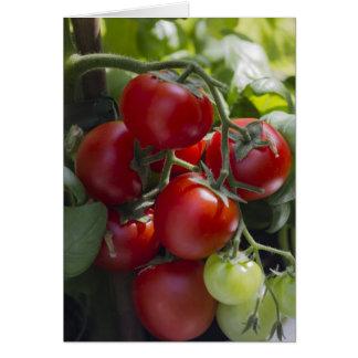 tomates en el jardín tarjeta de felicitación