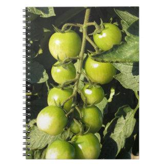 Tomates verdes que cuelgan en la planta en el cuaderno