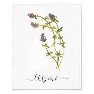 Tomillo botánico de la impresión de la hierba de foto