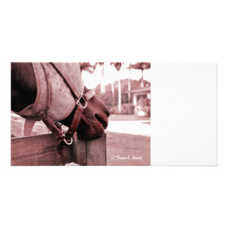tono rojo marrón del nom del nom del caballo tarjeta con foto personalizada