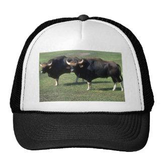 toros del Gaur-adulto Gorras