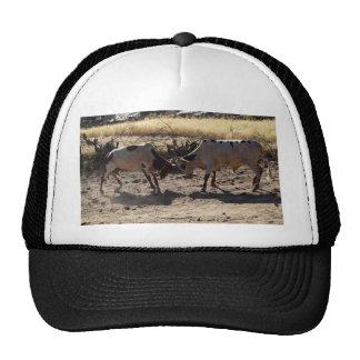 Toros que luchan gorras de camionero