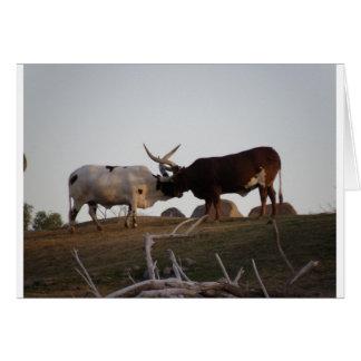 Toros que luchan tarjeta de felicitación