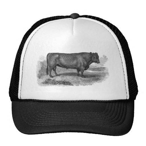 Toros retros de la vaca del ejemplo de Bull de los Gorras De Camionero