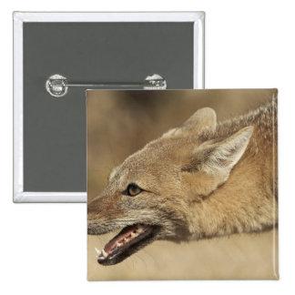 Torres del Paine, Chile. Fox gris patagón, Pin