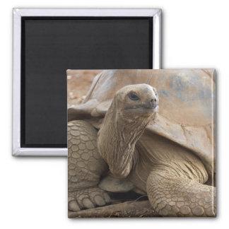 Tortuga de la tierra de Seychelle Aldabran Iman De Frigorífico