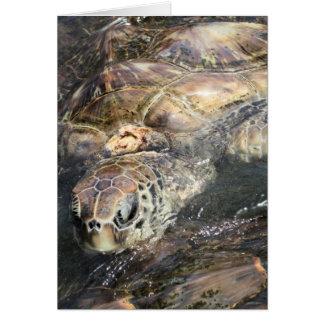 Tortuga de mar adulta felicitaciones