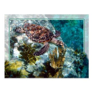 Tortuga de mar de Hawksbill, Islas Vírgenes de los Postal