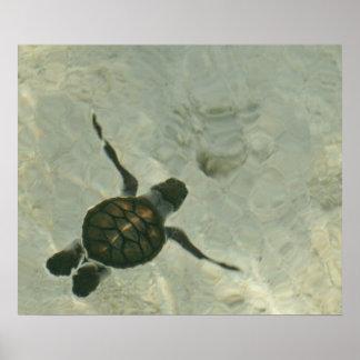 Tortuga de mar del bebé que nada hacia fuera al póster