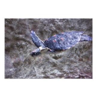 Tortuga de mar arte fotográfico