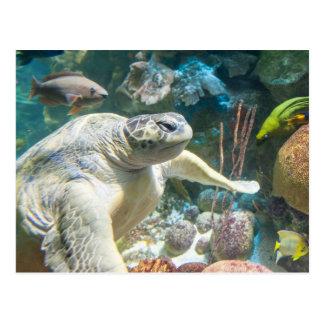 Tortuga de mar verde postal